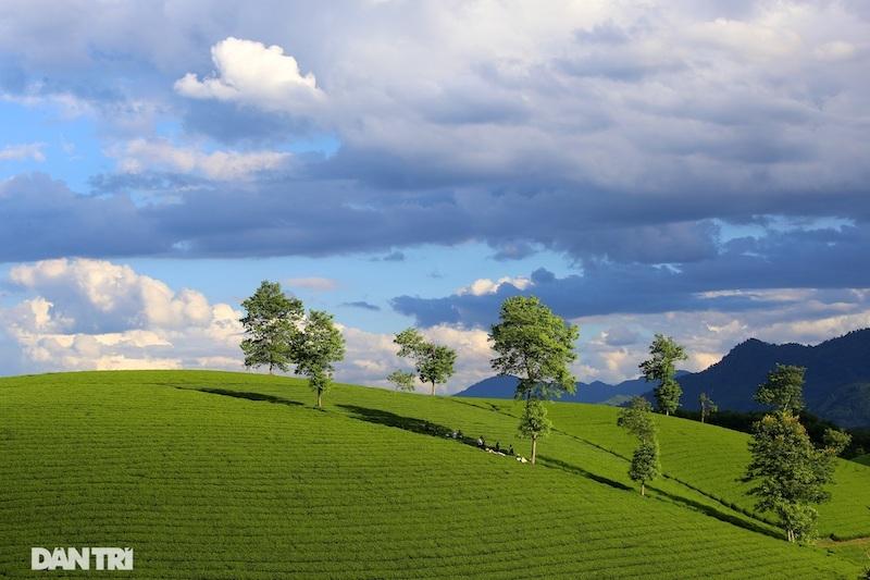 Choáng ngợp với cảnh sắc bao la, xanh ngát của những đồi chè ở Long Cốc, Phú Thọ