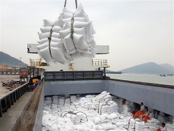 vietnams rice exports to africa continue to rise trade counsellor
