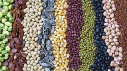 Xuất khẩu nông sản cao kỷ lục, Mỹ-Trung Quốc nhất trí tăng cường thương mại song phương