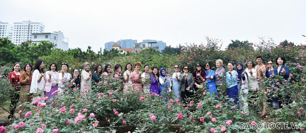 Nhóm Phụ nữ Cộng đồng ASEAN tại Hà Nội hái hoa trổ tài làm nước hoa hồng