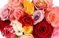 valentine trung ngay than tai hang hoa e am hang vang boi thu