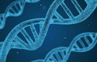 Xác định mối liên quan của 25 đột biến với nguy cơ ung thư ở phụ nữ