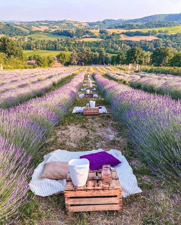 Italy: Ngắm cánh đồng hoa oải hương kết hợp ăn tối lãng mạn