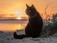 Australia: Thanh niên bỏ việc, bán nhà để đi phượt với... mèo
