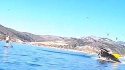 Thót tim khoảnh khắc cá voi lưng gù với 2 người phụ nữ