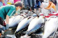 tuna exports expand 10 percent in 2019