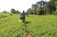 ha nois agriculture sector looks to grow post covid 19 pandemic